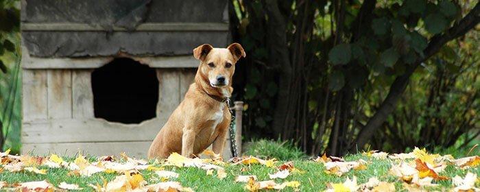 כלב בחצר