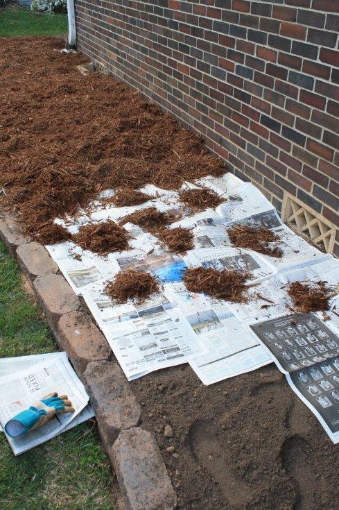 כיסוי אדמה בעזרת נייר עיתון כדי למנוע נביטת עשבים שוטים.